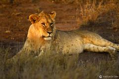 20190722 Tanzania-Serengueti (226) O01