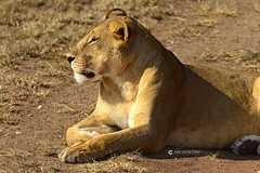 20190722 Tanzania-Serengueti (1193) R01