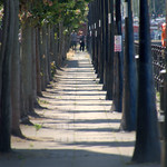 Tree lined pathway at Preston Docks