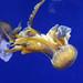 Oceanografic Aquarium