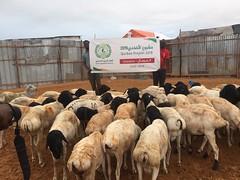 مشروع الاضاحي في الصومال Qurban in Somalia 2019