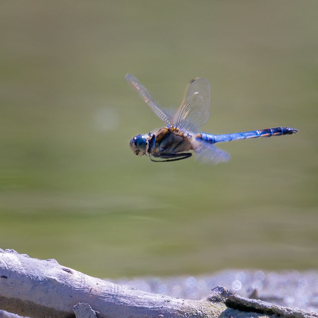 Dragon flyby | SONY a7RII & EF100~400L IS II & EF1.4x III on Metabones T Mark V