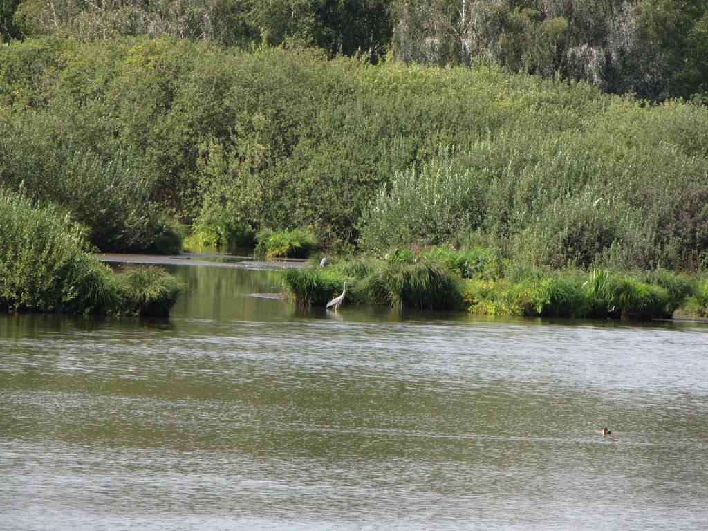 Der Reiher steht immer noch im Wasser