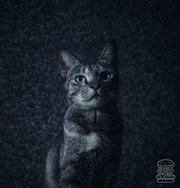 Moody Picture of a Cat