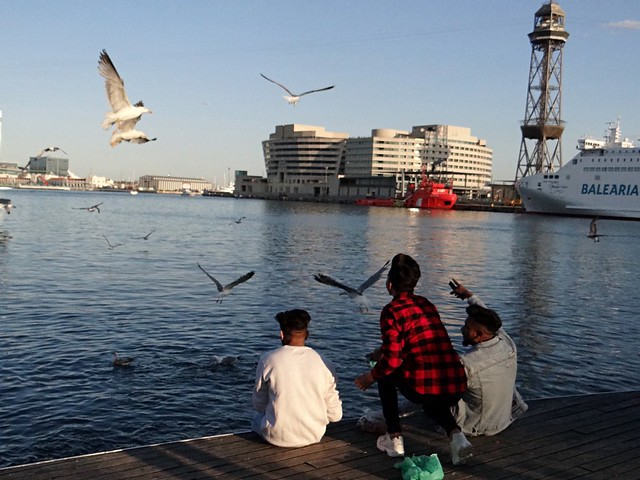 The boys and the seagulls.   Barcelona.
