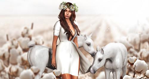 The cotton horsies