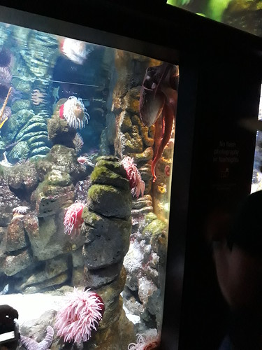 August 18, 2019 - 1:43pm - Children & Families Trip to the Aquarium