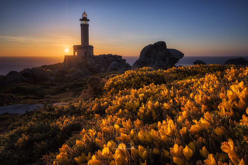 puntanariga lighthouse sunset flowering blooming blossom landscape coast spain galicia malpica