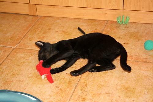 Pocahontas, gatita negra guapísima y dulce esterilizada, nacida en Mayo´19 en adopción. Valencia.  48576624211_1b6ce27d0b