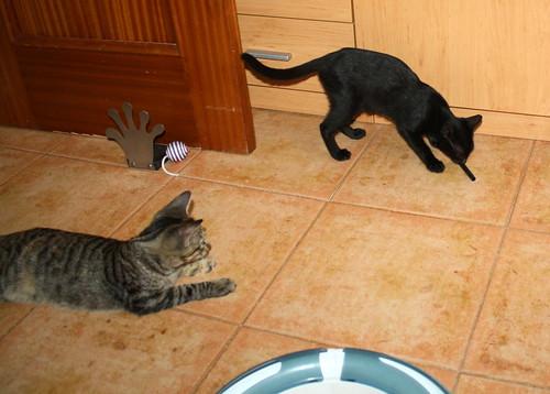 Pocahontas, gatita negra guapísima y dulce esterilizada, nacida en Mayo´19 en adopción. Valencia.  48576627956_909bfff26a