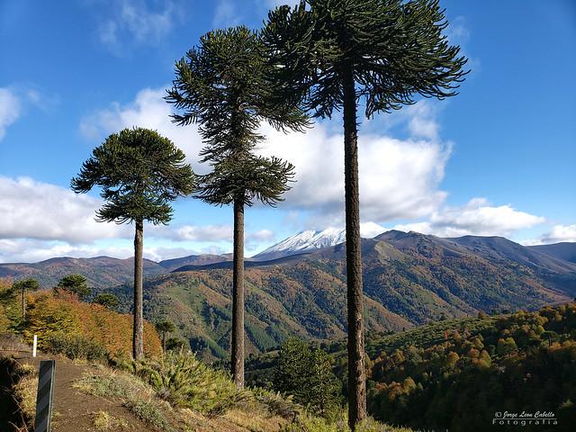 Volcan Lonquimay - Reserva Nacional Malalcahuello (Araucania Chile)