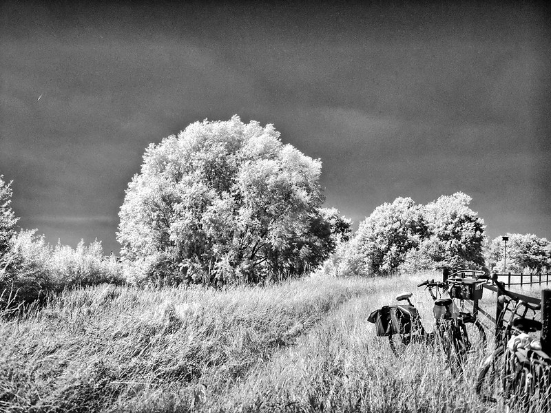 infra red-819_2727_easyHDR-black-and-white