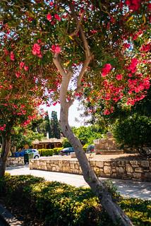 nature - Greece