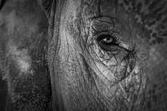 eye elephant travel thailandia thailand wild animals portrait nature soul