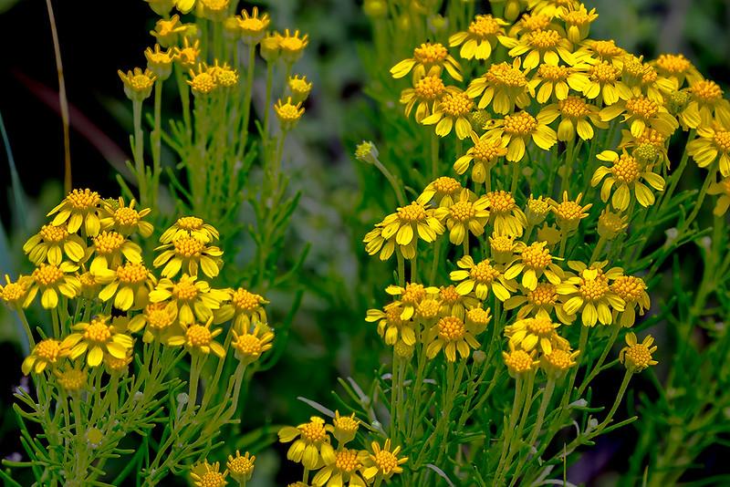 Wild-Flower-27-7D1-080819
