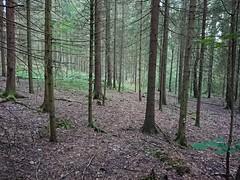 Hovskogen