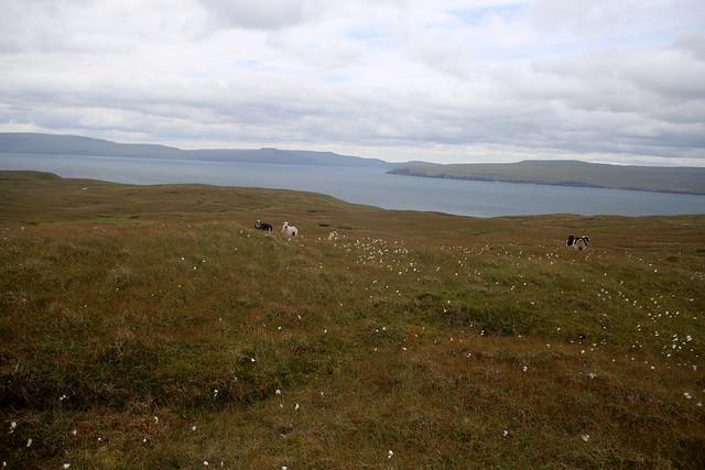 Footpath to Borðan lighthouse, Nólsoy