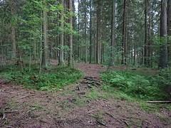 Roots in Hovskogen