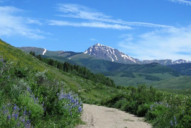 Wildflower Trails