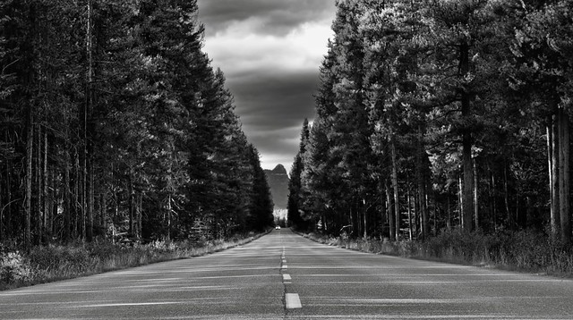 A Long Road Ahead with Lodgepole Forest All Around (Black & White, Banff National Park)