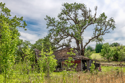 solemn d850 landscape bushes brush serious quiet summer abandoned barn tree colorful forest house oregon farm scary shack forgotten home creepy eaglepoint unitedstatesofamerica