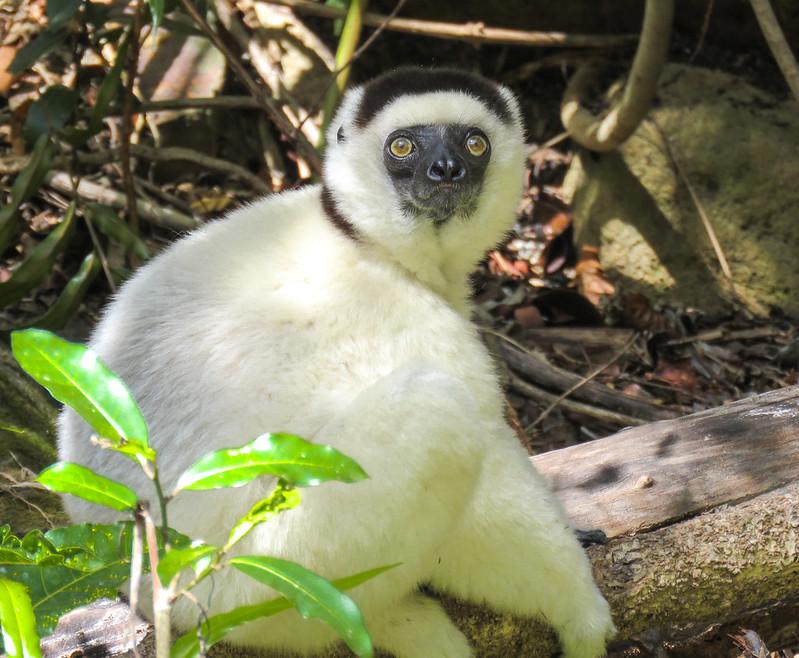 Madagascar-1113