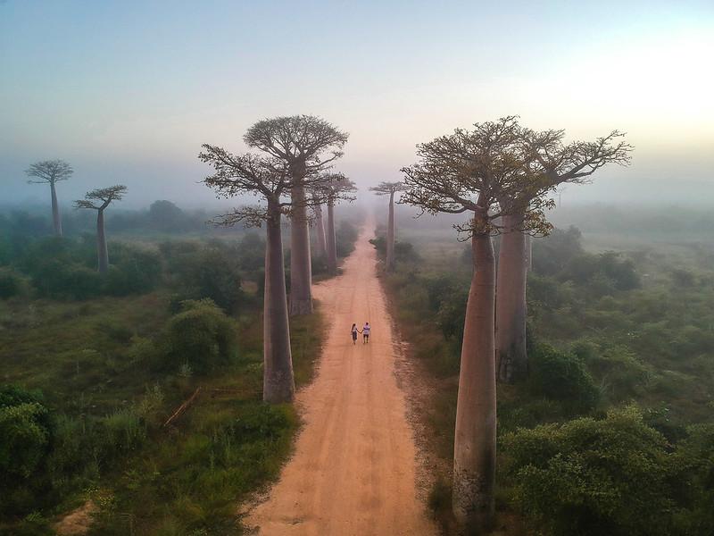 Madagascar-695