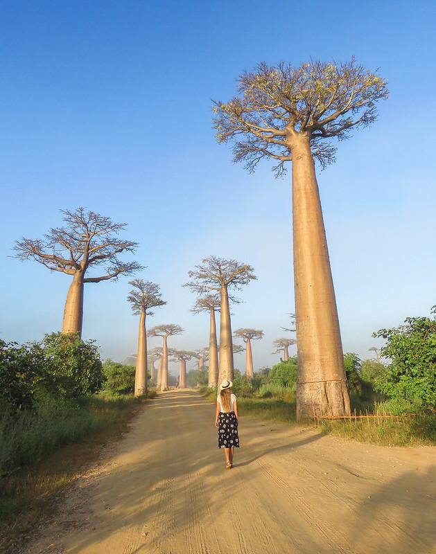 Madagascar-614