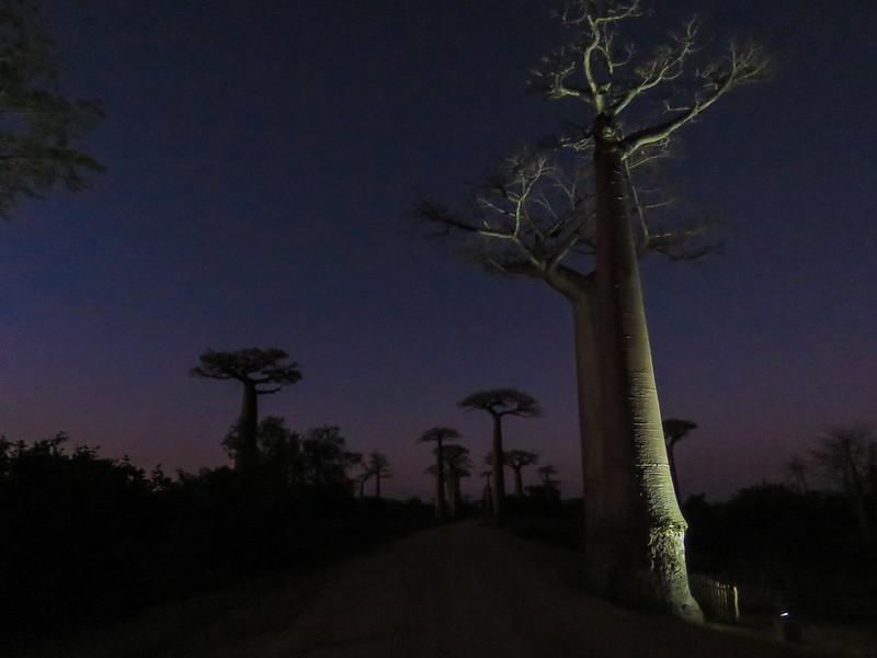 Madagascar-548