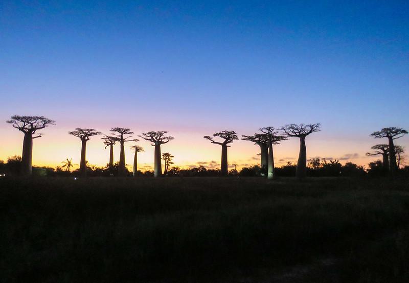 Madagascar-545