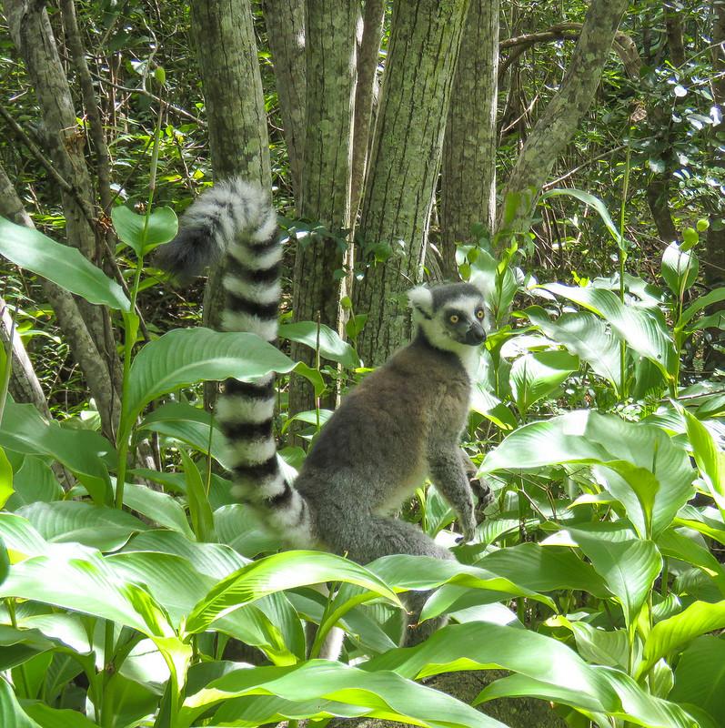 Madagascar-915
