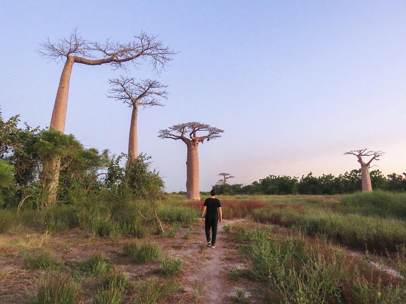 Madagascar-532