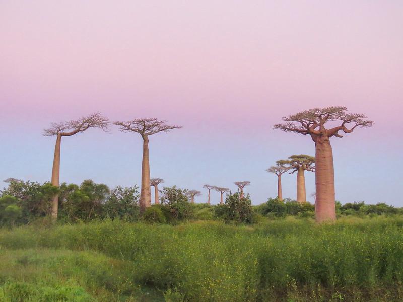 Madagascar-523