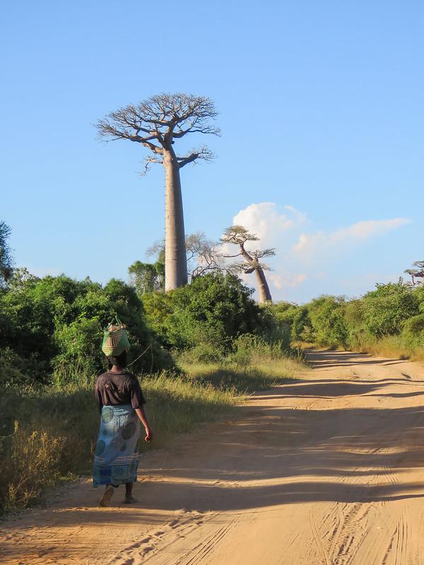 Madagascar-466