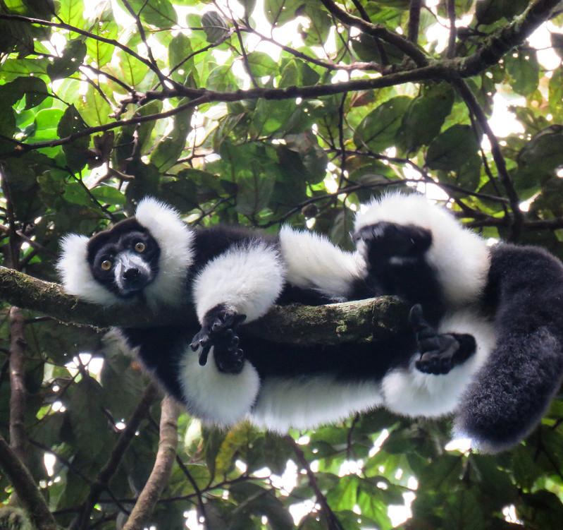 Madagascar-830