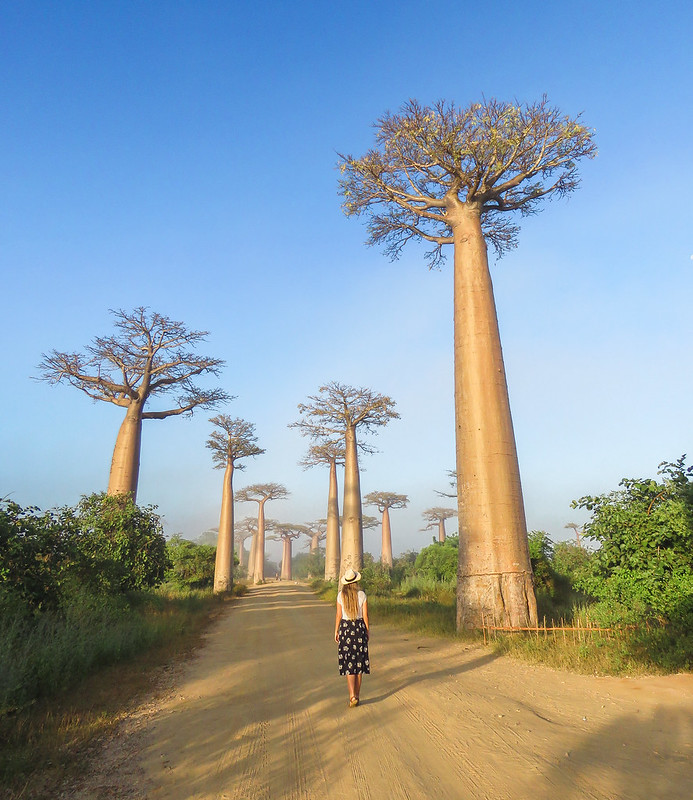 Madagascar-616