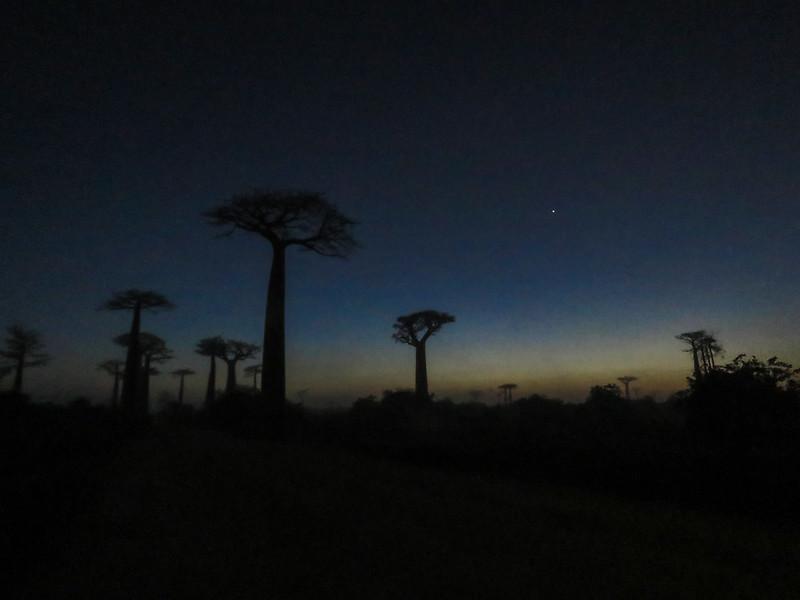 Madagascar-575