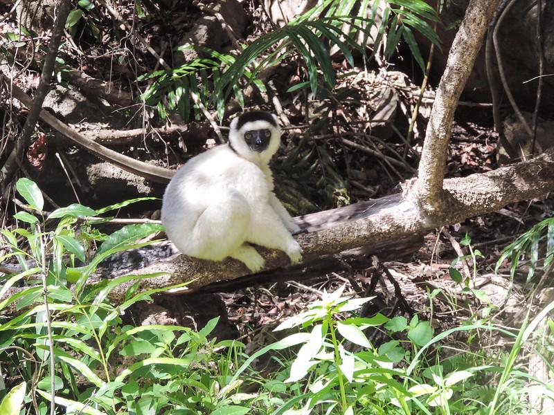 Madagascar-267