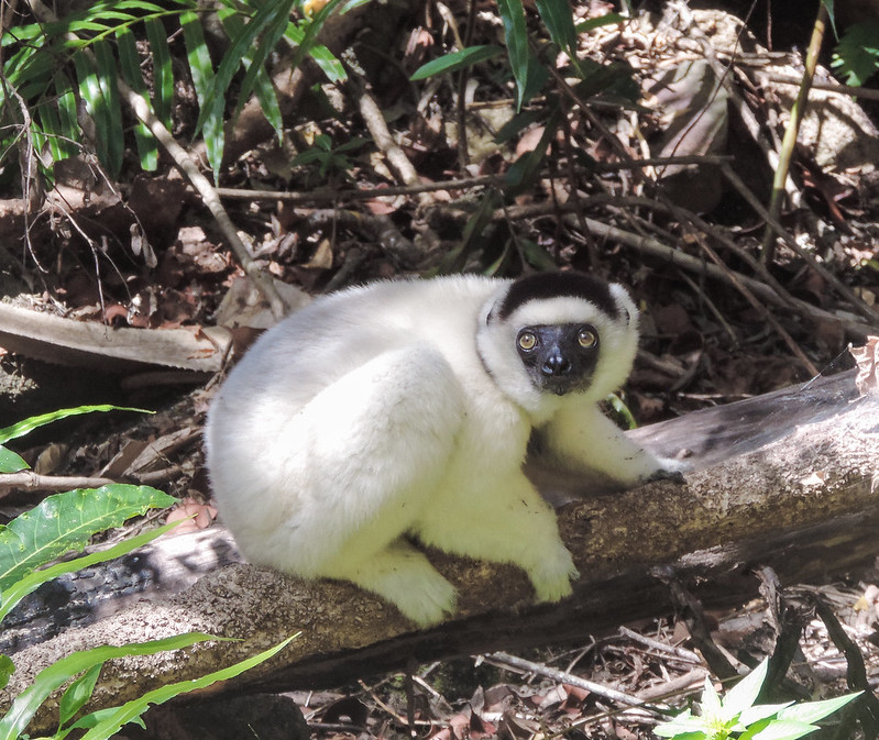 Madagascar-260