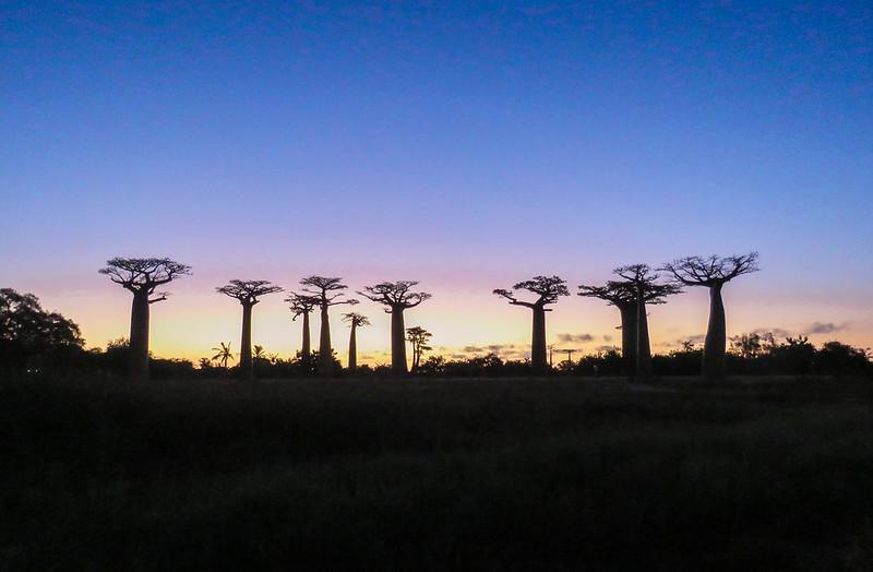 Madagascar-541