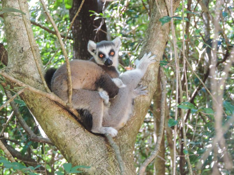 Madagascar-236