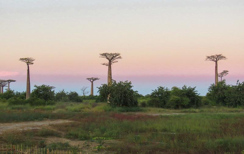 Madagascar-522