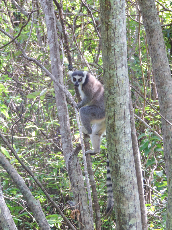 Madagascar-155
