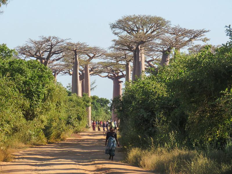 Madagascar-461