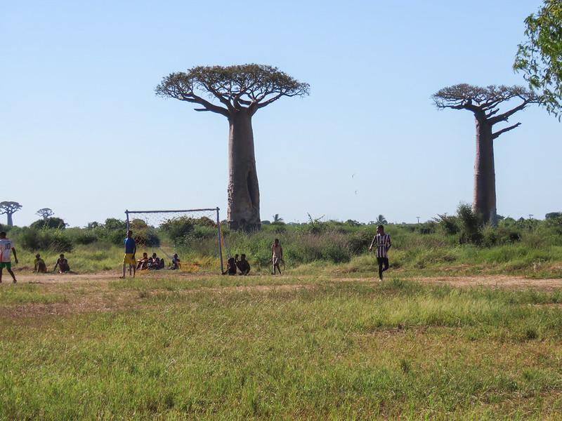 Madagascar-427
