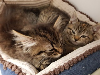 Kittens in a bed