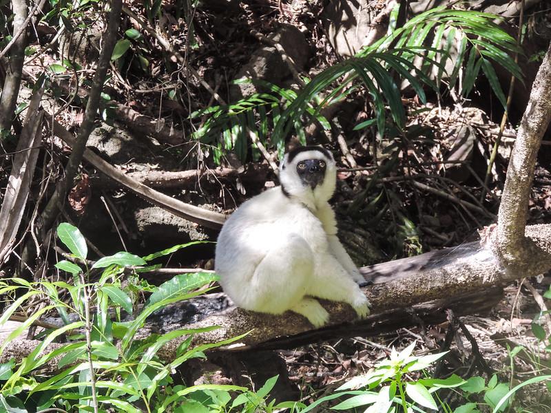 Madagascar-264
