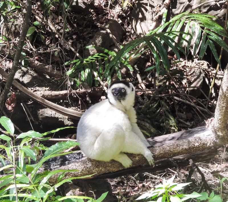 Madagascar-263