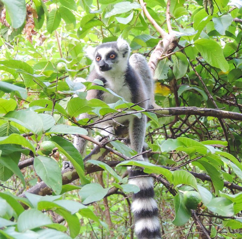 Madagascar-146