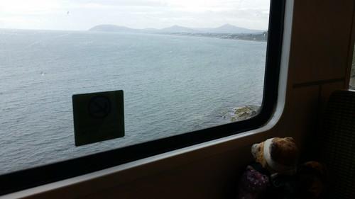 Trainwatching Bear